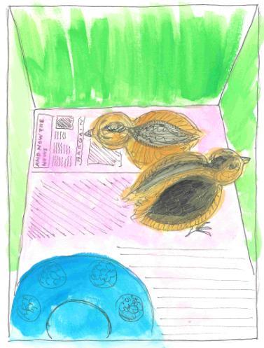 spring-chicks.JPG