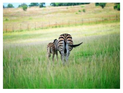 Zebra Mama and Baby in Africa, photo © 2007 by ybonesy, all rights reserved