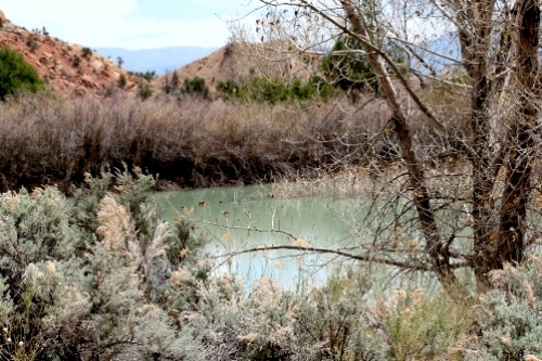 Pond at Ghost Ranch, Ghost Ranch, NM, April 2008, photo © 2008 by Bob Chrisman. All rights reserved.