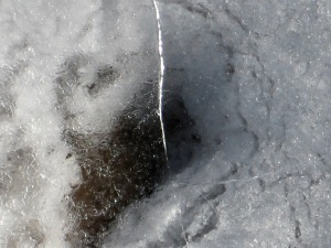 Image, I noticed the image of a face in this photo that Jim took of an ice crack over a hole, photo © 2007-2009 by Jim, all rights reserved