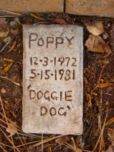 poppy-dog