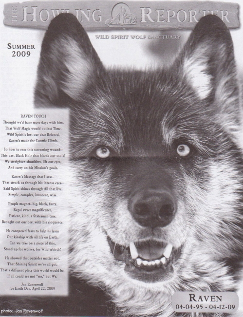 Howling Reporter newsletter, Memorial to Raven, image reprinted with permission from Wild Spirit Wolf Sanctuary, photo of Raven © 2009 by Jan Ravenwolf, all rights reserved