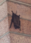 Bat photo provided by Michelle McCaulley, Rio Grande Basin Bat Project, all rights reserved