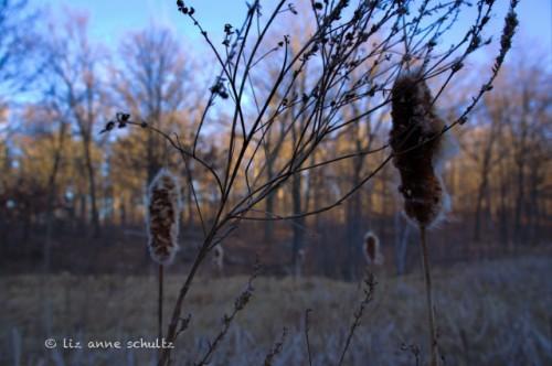 Cattail Bog - 2-10-12 - 2