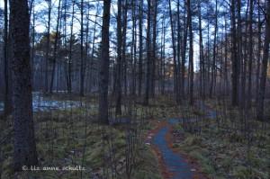 QuoinBog Path - 2-10-12 - 2